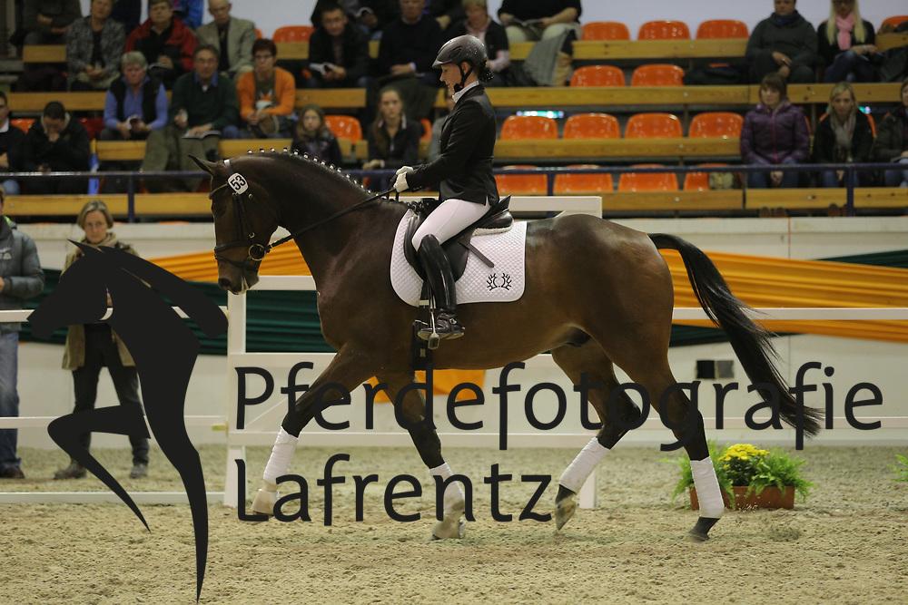 Freund, Jana, Guardi<br /> Trakehner Hengstmarkt 2013<br /> Präsentation, Reitpferde, Auktionsstuten<br /> © www.sportfotos-lafrentz.de / Stefan Lafrentz