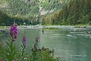 A fisherman tries his luck on the Chilkoot River which runs from the Chilkoot L. outlet just a few miles down to salt water at Haines, Alaska.