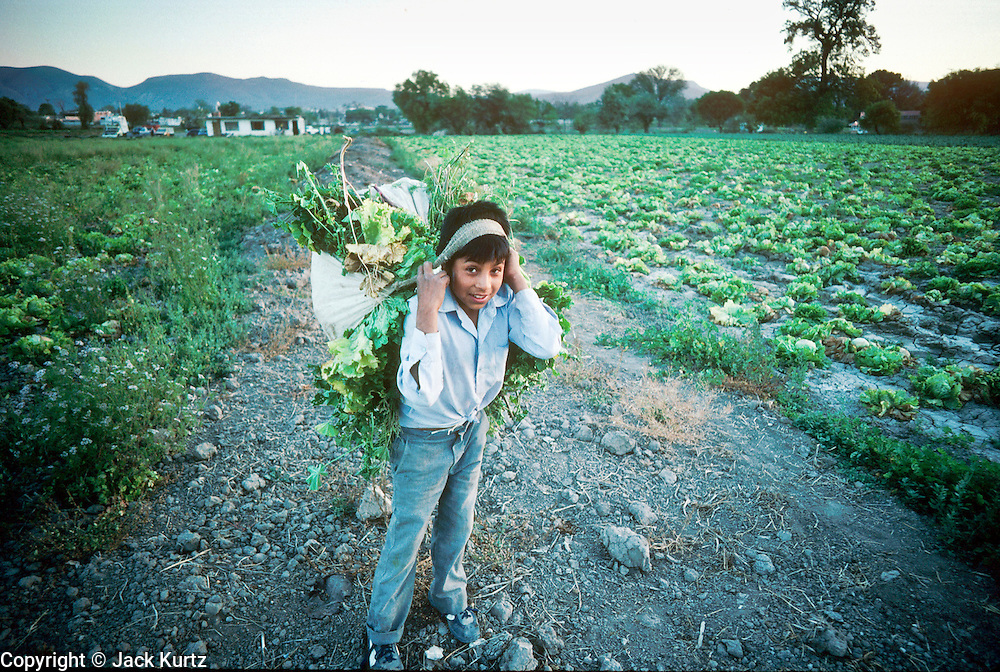 IXMIQUILPAN, HIDALGO, MEXICO: A boy in a lettuce field in the town of Ixmiquilpan, state of Hidalgo, central Mexico. The vegetable were for export to the US and grocery stores in Mexico City. PHOTO © JACK KURTZ   AGRICULTURE LABOUR  FOOD  FAMILY CHILDREN CHILD LABOUR