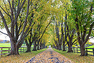 A beautiful tree lined country lane on an autumn morning, Southwestern Ohio, USA