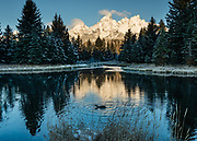 Sunrise spotlights Grand Teton, the highest mountain (13,775 feet) in Grand Teton National Park. A feeding duck ripples reflections in the Snake River at Schwabacher Landing, on US Highways 26 / 89 / 191, about 16 miles north of Jackson Hole, in Wyoming, USA.