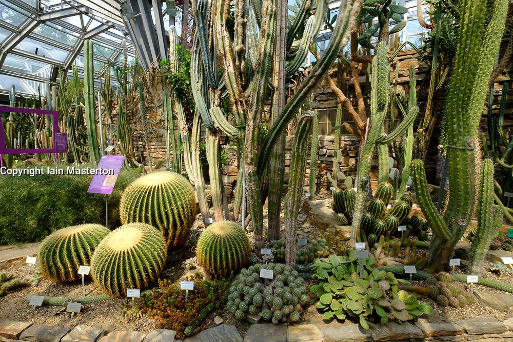 Cactus display in greenhouse at Berlin Botanical Garden in Dahlem, Berlin, Germany