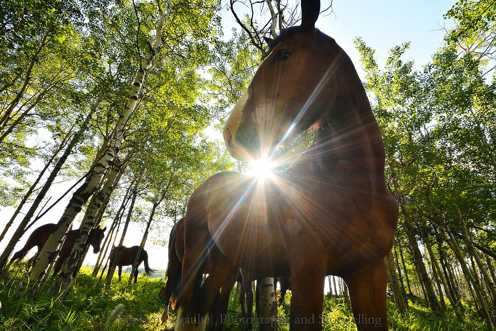 Sunrise Pony, near Turner Valley, Alberta