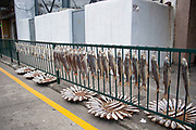 Fish are hung up or placed out to dry by the roadside in Macau, China. On the busy main road which encircles Macao, these locally caught fish are preserved, albeit in a slightly polluted setting. Macau is an autonomous region on the south coast of China, across from Hong Kong. A Portuguese territory until 1999, it reflects a mix of cultural influences.
