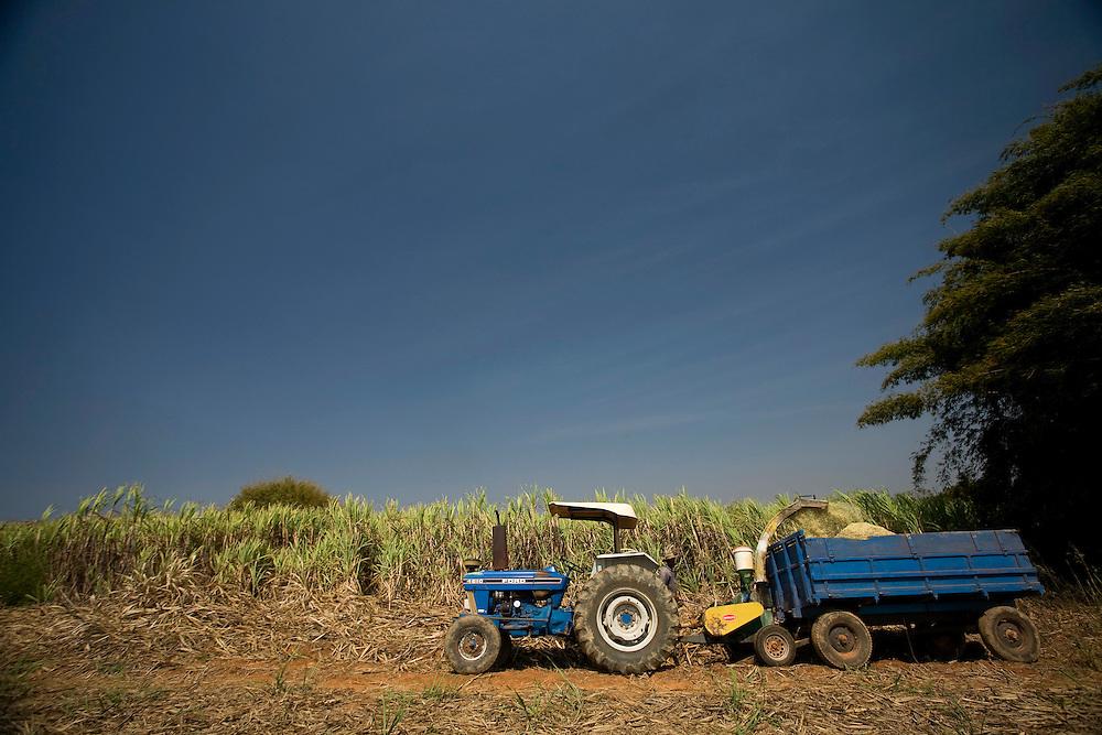 Bambui_MG, Brasil...Plantacao de cana em Bambui, Minas Gerais...The sugar cane agriculture in Bambui, Minas Gerais...FOTO: JOAO MARCOS ROSA / NITRO