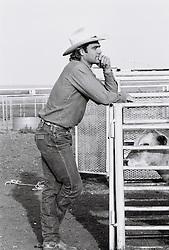 Cowboy standing outside cattle pen