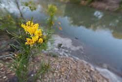 Wildflowers on McCommas Bluff above Trinity River, Great Trinity Forest, Dallas, Texas, USA