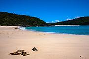 Shelly Beach, Elizabeth Bay, New South Wales, Australia