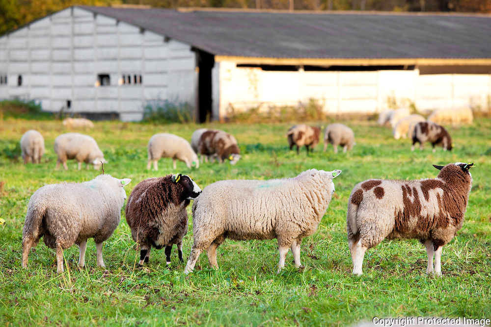 368625-schapenweide en stal waar met het offerfeest illegale slachtingen gaan plaatsvinden-Fortweg 33 Lier