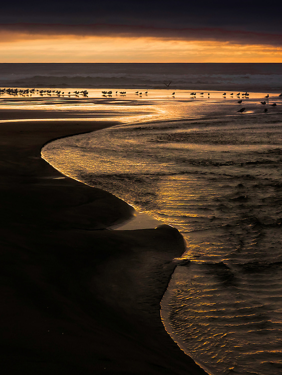 Taken in the fall of 2014, on the central Oregon coast, this group of gulls kept moving farther out as the tide receded. Right at low tide this beautiful design appeared in the foreground, illuminated by the setting sun.