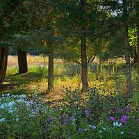 A shaft of sunlight illuminates the edge of a meadow.
