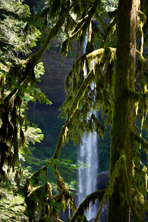 Silver Falls State Park, near Silverton, Oregon and about an 1 1/4 hours south of Portland in the Willamette Valley. Photo by Randy L. Rasmussen, © 2018.
