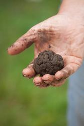 The magic soil preparation used at Tablehurst Farm