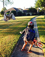 A sandhill crane spreads its wings and lungs forward to protect its family as Axel Moss, 9, rides his bicycle to school Wednesday, Oct. 29, 2014, in Orlando, Fla. Moss was not injured in the incident.(AP Photo/Phelan M. Ebenhack)