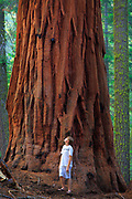 Boy and a giant Sequoia tree.  Sequoia National Park, California.