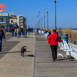 Rehoboth Beach, DE, USA - March 11, 2012: In early spring, people enjoy the boardwalk in Rehoboth Beach Delaware, including dog walkers.
