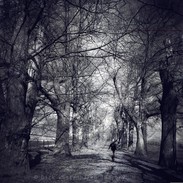 Sunlit alley of old chestnut trees. Manipulated photograph.<br /> <br /> Prints & more: http://society6.com/DirkWuestenhagenImagery/shadow-alley_Print