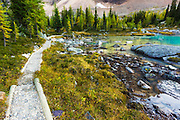 The Opabin Plateau trail above Lake O'hara, Yoho National Park, British Columbia, Canada