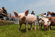 Hertfordshire County Show