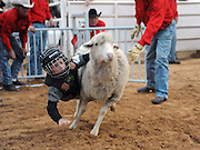 Child Sheep Racing<br /> <br /> Mutton busting is an event held at rodeos similar to bull riding or bronc riding, in which children ride or race sheep<br /> In the event, a sheep is held still, either in a small chute or by an adult handler while a child is placed on top in a riding position. Once the child is seated atop the sheep, the sheep is released and usually starts to run in an attempt to get the child off. Often small prizes or ribbons are given out to the children who can stay on the longest. There are no set rules for mutton busting,<br /> The vast majority of children participating in the event fall off in less than 8 seconds. Age, height and weight restrictions on participants generally prevent injuries to the sheep, and implements such as spurs are banned from use. In most cases, children are required to wear helmets and parents are often asked to sign waivers to protect the rodeo from legal action in that event.<br /> <br /> Photo shows: Amarillo, Texas, USA - Ethan Frazier, age 4, at the mutton bustin' competition at the Tri-State Fair rodeo in Amarillo, Texas.<br /> ©Exclusivepix