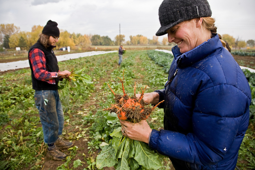 Cure Organic Farm, Boulder, Colo., Tuesday, Oct. 21, 2008.  (Photo/William Drumm)