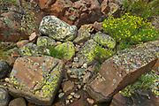 Lichens on rock<br />Killarney Provincial Park<br />Ontario<br />Canada