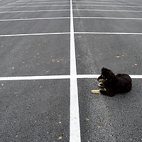 012214  Adron Gardner/Independent<br /> <br /> A dog finds a parking spot at the Bee Hółdzil Fighting Scout Event Center in Fort Defiance Wednesday.