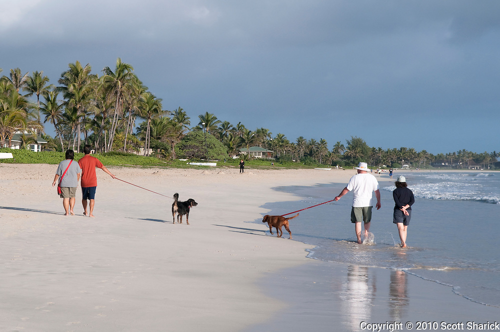 Two couples walk their dog along Kailua Beach.