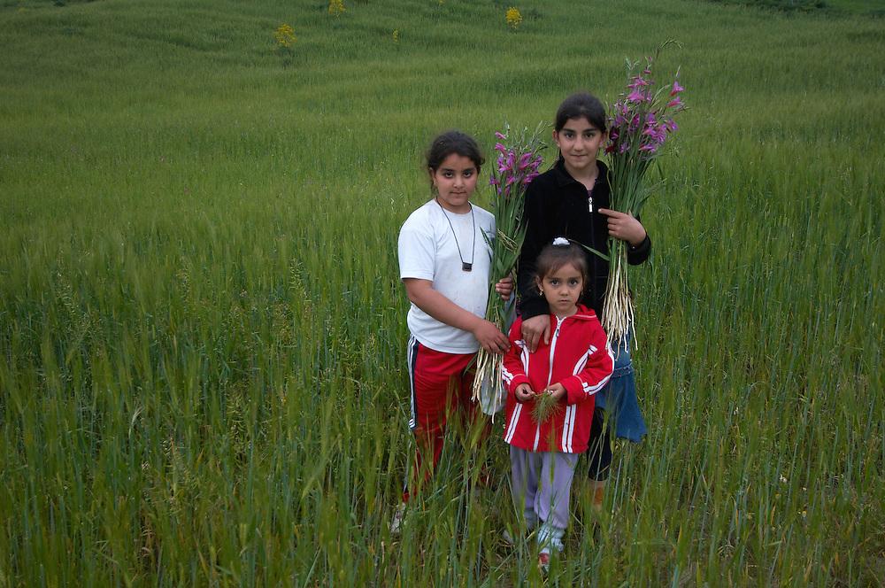 Three girls have picked Field Gladiolus  (Gladiolus italicus), Northern Cyprus