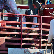 Geral Eash wraps up before his ride at the Darby MT Elite Proffesionals Bull Riding Event July 7th 2017.  Photo by Josh Homer/Burning Ember Photography.  Photo credit must be given on all uses.