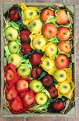 Apples stored decoratively in box at West Dean