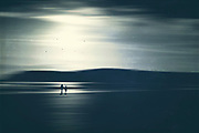 A couple taking a walk on the beach in the evening sun - monochrome manipulated photograph