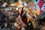 A detail of rotting vegetables in a garden compost bin. A detail of organic vegetable and fruit matter decomposing inside a home garden composting bin. We look down on to the natural waste as a close-up of the vegetables and fruit scraps that have been thrown away by a city householder in south London. Local authorities encourage the use of compost bins in back gardens (yards) and the proliferation of these efficient containers mean that their residue can be returned to the soil without the expense of transport to landfill. The rotting matter of carrot skins etc. will eventually become a nutritious feed for new plants - and so the cycle goes on.