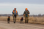 John Zeman (left) and Bob St. Pierre, along with their German Shorthairs, Frank and Esky, hunt pheasants on a Minnesota public hunting area.