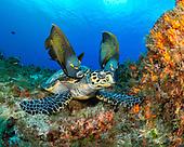Cozumel, MX, Underwater