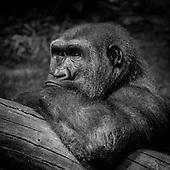 Zoo Faces +