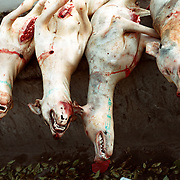 Yanji city, China, 11-2003..Slaughtered dogs piled on the side of a street in an ethnic Korean enclave of China. These animals are considered a delicacy among Koreans. ..China help North Korea fight the Korean War in the 1950s and continue to have a defence treaty with the Stalinist country...Ruled by the messianic leader Kim Il Sung and his son Kim Jong Il since 1948, North Korea has stubbornly stuck to its juche (self-reliance) ideology and siege mentality, imposing one Stalinist economic plan after another. Floods, droughts and mismanagement in the 1990s plunged the country into a preventable famine, killing up to three million, or 13 percent of the population. It now depends heavily on Chinese aid...