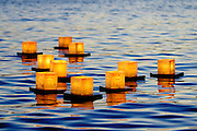 Lanterns floating in the ocean as part of the Lantern Floating Ceremony in Honolulu.