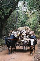 Farmer, zebu cart, and Palm leaves