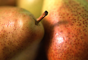 Close up selective focus photograph of some Forelle pears