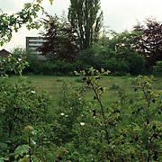 Studiostraat Huizen bosjes terrein achter het Jan Ligthartcentrum