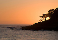 Surfer in the water and cypress tree silhouette at sunset, Santa Cruz, California