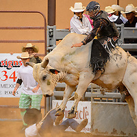 061313  Adron Gardner/Independent<br /> <br /> Hadley Miller attempts a ride aboard the bull Power Stroke during the Gallup Lions Club Rodeo at Red Rock Park Saturday.