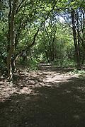 Winding woodland track through trees, Suffolk, England