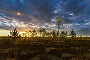 "Heather fields with small patches of trees in sunrise, protected landscape area ""Ādaži"", Latvia Ⓒ Davis Ulands   davisulands.com"