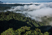 Cloud Forest<br /> Mashpi Rainforest Biodiversity Reserve<br /> Pichincha<br /> Ecuador<br /> South America