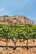 Domaine de l'Hortus. The Montagne Massif de l'Hortus mountain cliff. Pic St Loup. Languedoc. Mourvedre vines facing south. Terroir soil. France. Europe. Vineyard. Soil with stones rocks.