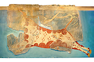 Mycenaean Fresco wall painting of a man leaping over a bull  from the Tiryns, Greece. 14th - 13th Century BC. Athens Archaeological Museum. .<br /> <br /> If you prefer to buy from our ALAMY PHOTO LIBRARY  Collection visit : https://www.alamy.com/portfolio/paul-williams-funkystock/mycenaean-art-artefacts.html . Type -   Athens    - into the LOWER SEARCH WITHIN GALLERY box. Refine search by adding background colour, place, museum etc<br /> <br /> Visit our MYCENAEN ART PHOTO COLLECTIONS for more photos to download  as wall art prints https://funkystock.photoshelter.com/gallery-collection/Pictures-Images-of-Ancient-Mycenaean-Art-Artefacts-Archaeology-Sites/C0000xRC5WLQcbhQ