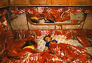 A brother and sister sleeping, in their caravan in Vicolo Savini camp. In 2003 this Roma community was forcibly evicted from their urban home and moved to a container camp at Castel Romano, far away from public amenities.  Rome, Italy 2002...Roma Gypsies left Rajasthan in India a thousand years ago, in the ninth and tenth centuries. They were pushed west by the Ottoman Muslim Empire as it moved through Persia towards the frontiers of Europe. They entered Europe in the foutrteenth century and were slaves in Romania and Moldavia until the mid 1850s. There are about 15 million Roma gypries in the world, about 12 million who live in Europe. they are Europe's largest ethnic minority. They have rich traditions and culture, their own language. They are renowned for their prowess in music and dance; they are also skilled craftsman, metal roofmakers, silver and goldsmiths. Their traveling and nomadic lifestyle which grew from a necessity to find work, and because they were often moved on from one place to the next, has given them both a liberty but also marks them as different and they are often feared by sedentary peoples, who label and scapegoat them. They are hardy survivors and live in the brunt of racism and prejudice, often marginalised, living in poverty, without proper human rights afforded to them..