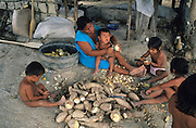 MACUXI INDIGENOUS PEOPLE, Amazon, near Boavista, northern Brazil, South America. Preparing yam roots. Mother at home with children preparing food. Children, Macuxi indians involved in long hard process extracting flour from yam root. Traditional carbohydrate staple food for tortillas and other foods. Ecological biosphere and fragile ecosystem where flora and fauna, and native lifestyles are threatened by progress and development. The rainforest is home to many plants and animals who are endangered or facing extinction. This region is home to indigenous primitive and tribal peoples including the Yanomami and Macuxi.
